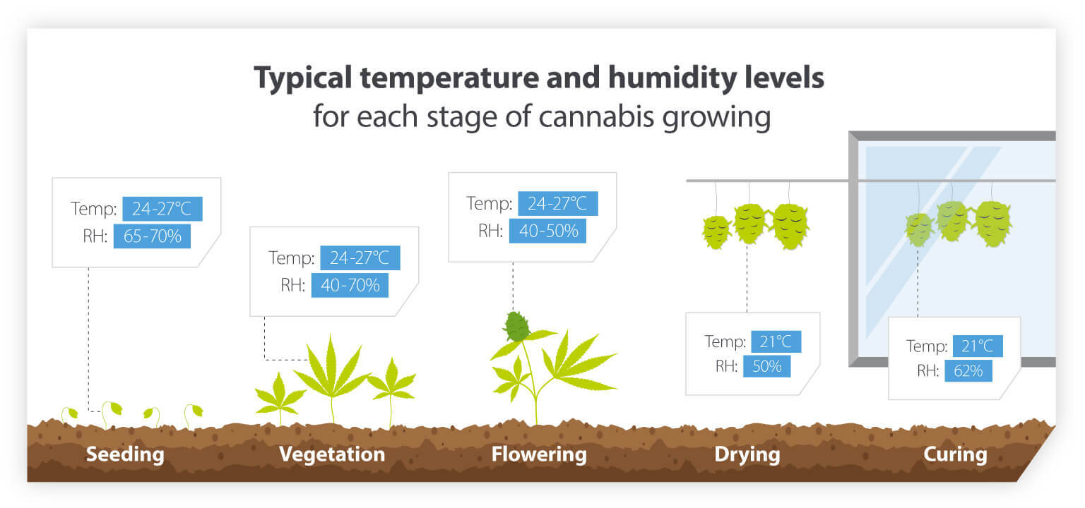 Cannabis growing temperatures and humidities