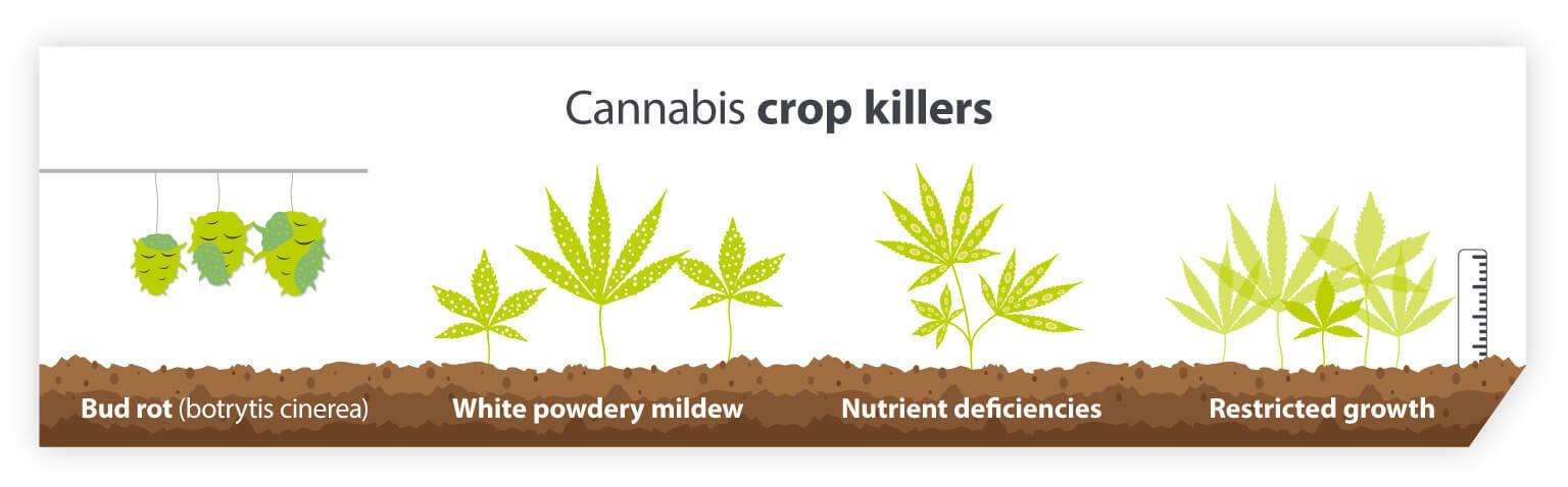 Cannabis crop killers